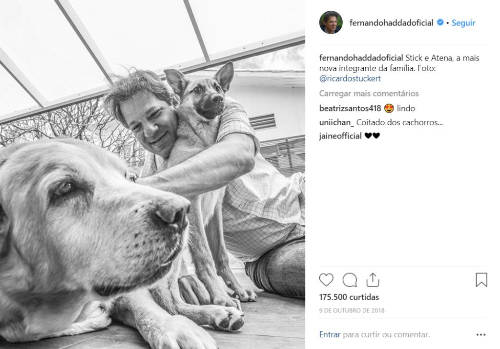 Candidato a presidente pelo PT e ex-prefeito de São Paulo, Fernando Haddad postou no Instagram, foto abraçando e acariciando seus dois cães, o que humaniza sua imagem e traz identificação com o público